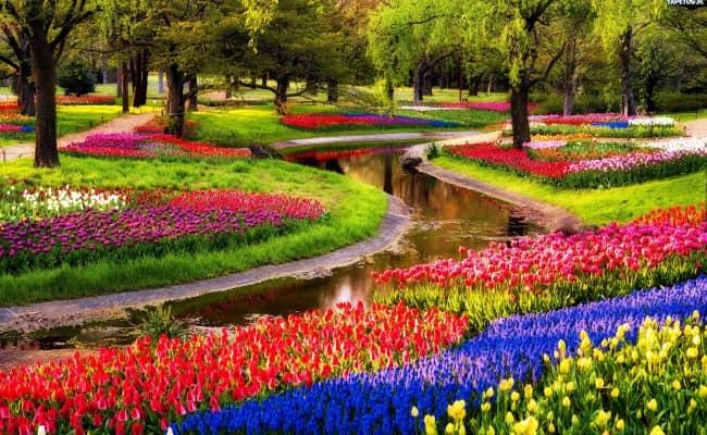 Sắc hoa mùa xuân Châu Âu