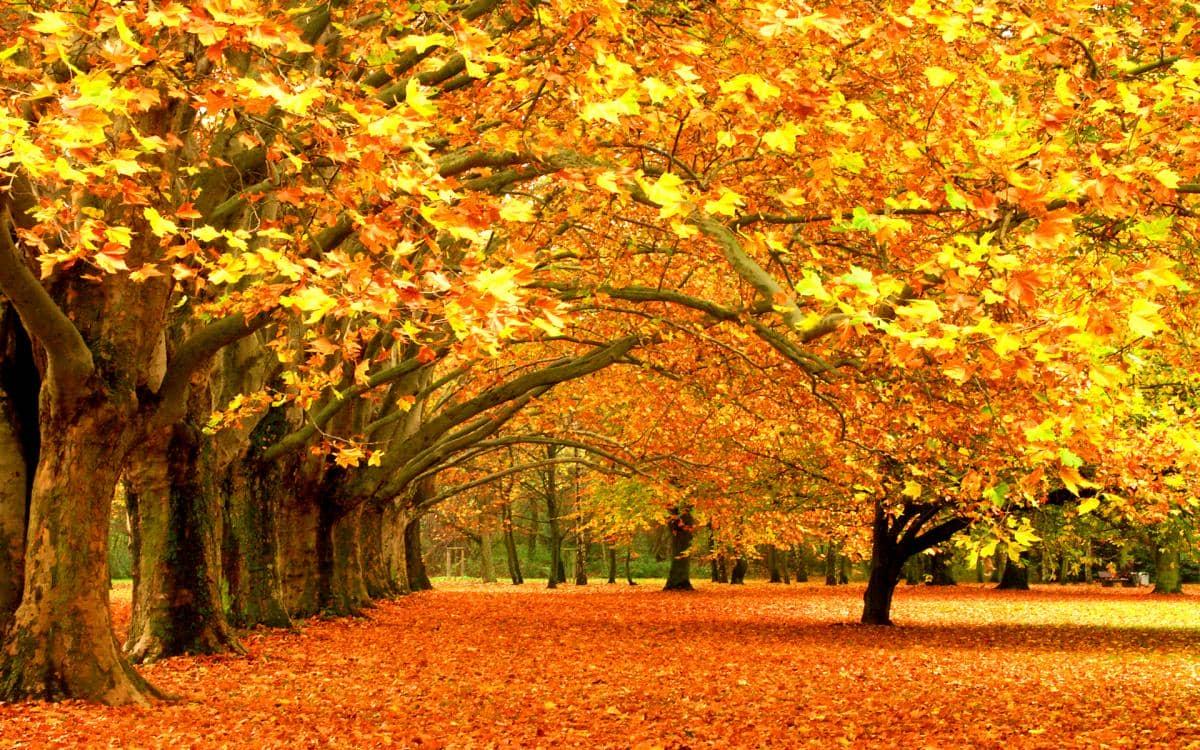 Mùa thu Châu Âu