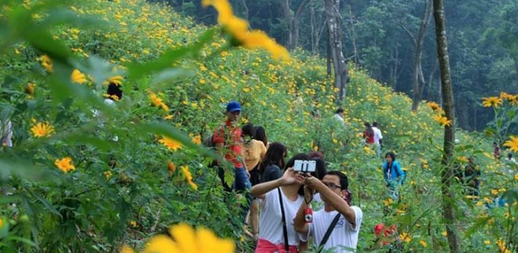 Lưu giữ những bức ảnh tuyệt vời với hoa dã quỳ tại vườn quốc gia Ba Vì