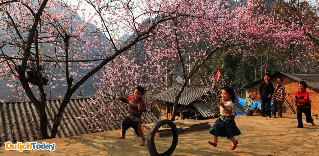 Mộc Châu - địa điểm du xuân ngày Tết