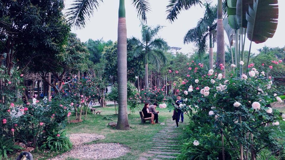 Đắm say với con đường tình yêu, Thung lũng hoa hướng dương, vườn địa đàng ngập tràn hoa hồng cổ