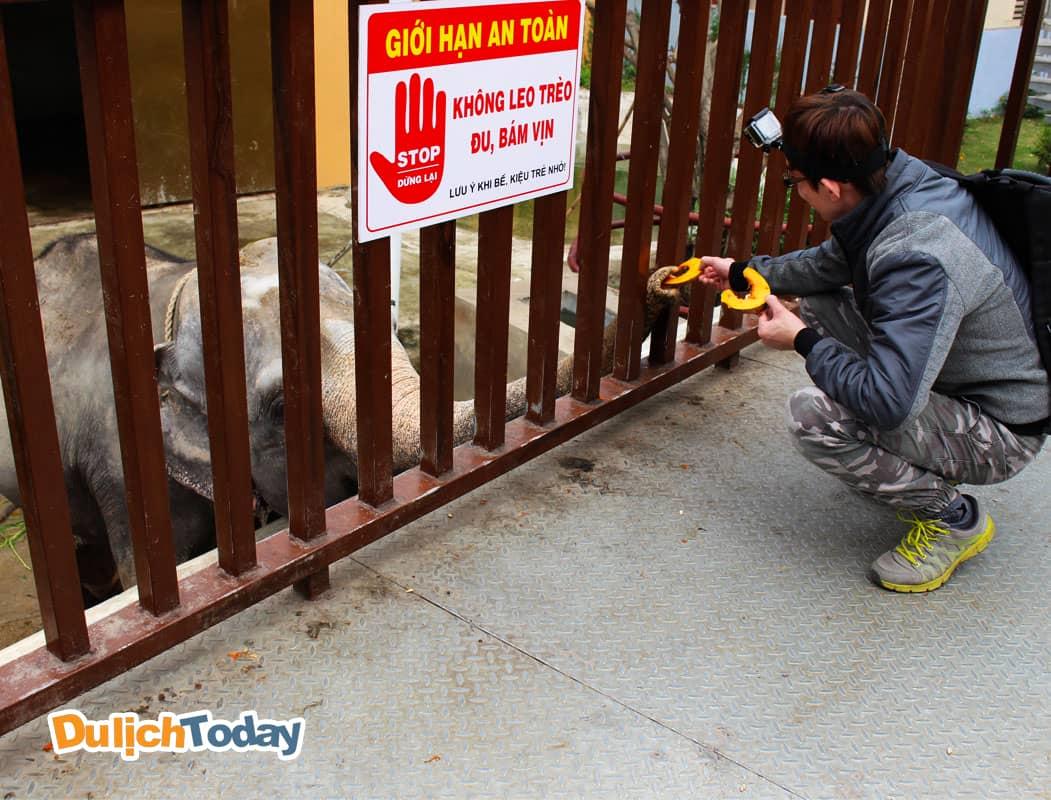 Cho voi ăn tại vườn thú Thiên Đường Bảo Sơn