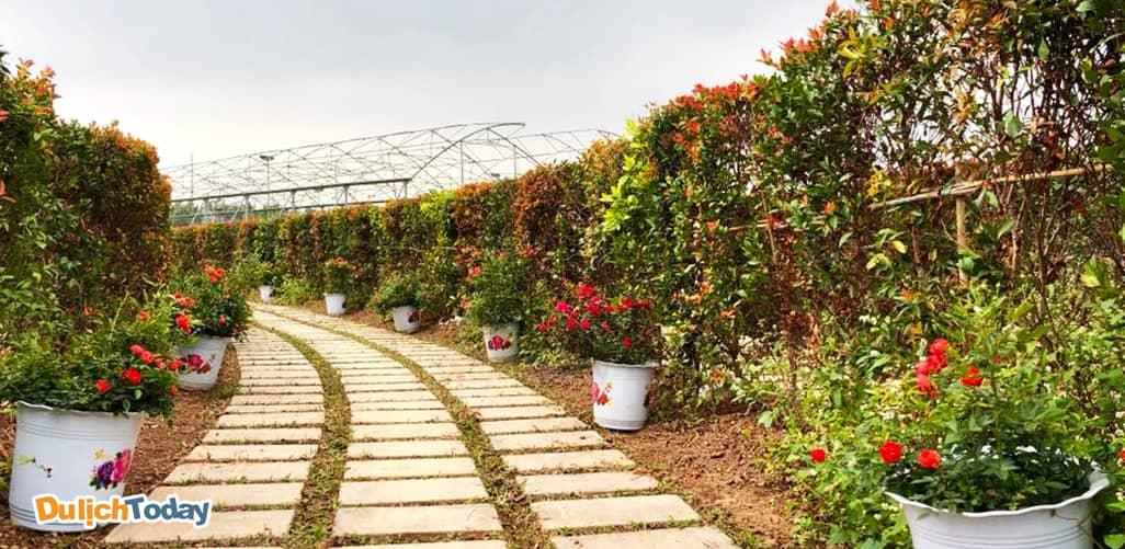 Mê cung hoa lớn nhất Việt Nam