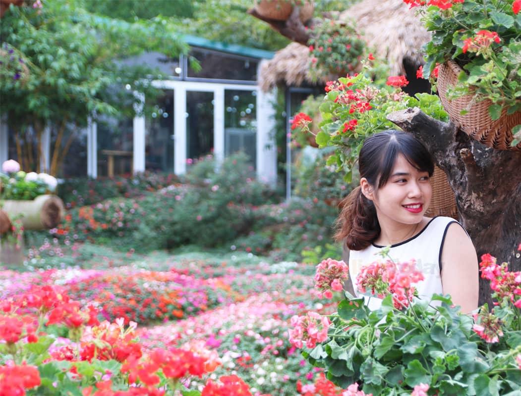 Những thảm hoa phong nữ rực rỡ khoe sắc bất kể đông hay hè