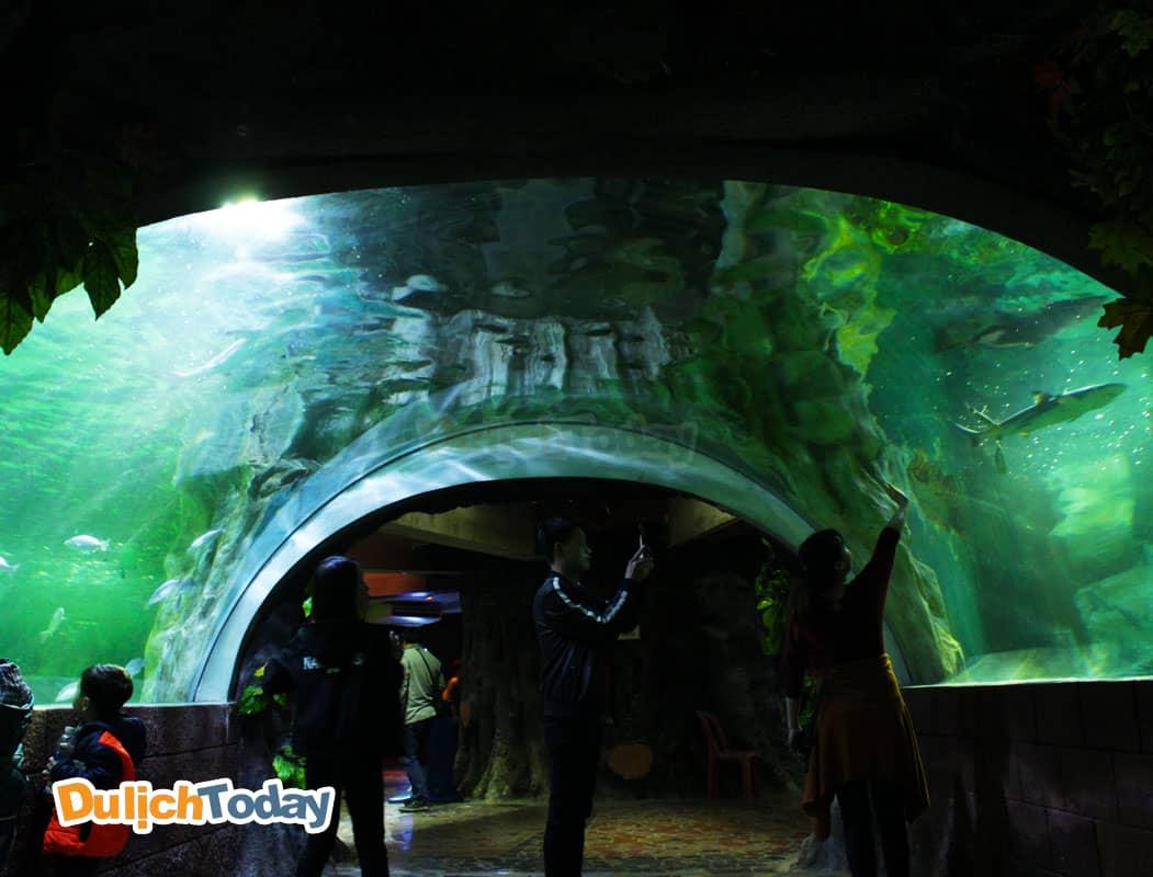 Thủy cung công viên Thiên Đường Bảo Sơn