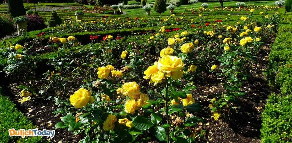 Vườn hoa hồng vệ nữ