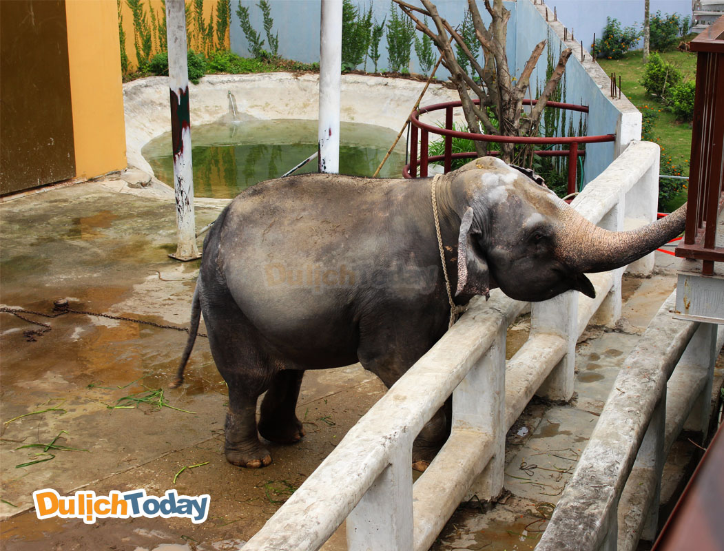 Voi tại vườn thú Thiên Đường Bảo Sơn