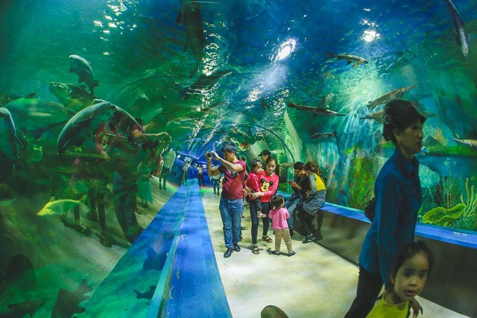 Chơi thả phanh Safari duy nhất tại Hà Nội, thủy cung kì ảo siêu rộng