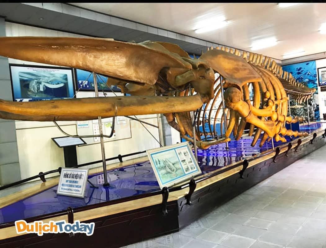 Bộ xương cá voi khổng lồ là một trong những hiện vật ấn tượng của Viện Hải Dương học Nha Trang
