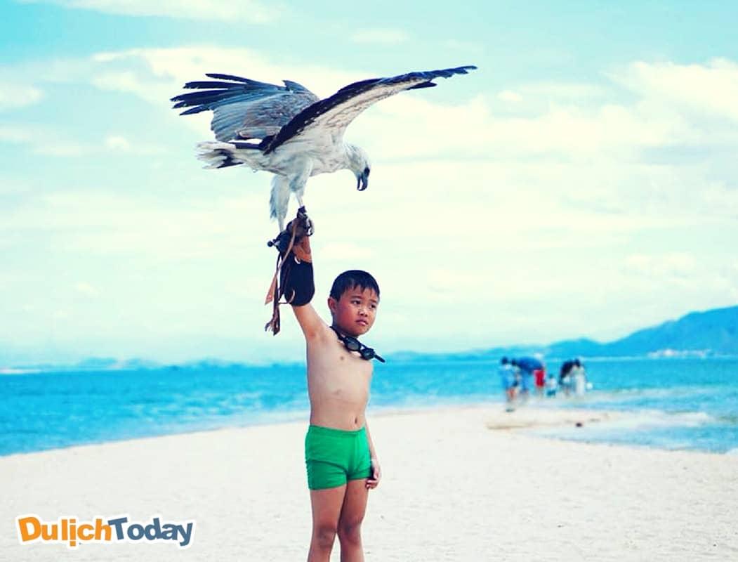 Trải nghiệm tham gia huấn luyện chim ưng ở đảo Điệp Sơn