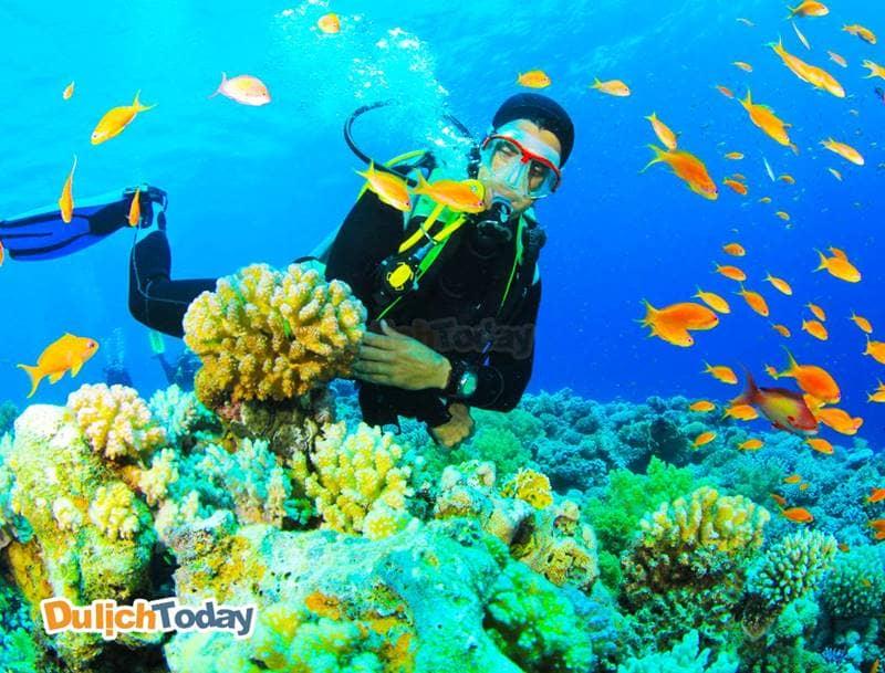 Lặn biển ngắm san hô -hoạt động vui chơi ưa thích khi đến Nha Trang