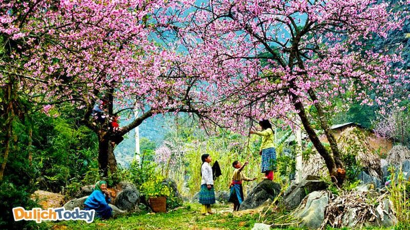 Đến thăm Tây Bắc vào mùa xuân để có thể chìm đắm trong vẻ đẹp của hoa ban, của núi rừng Tây Bắc