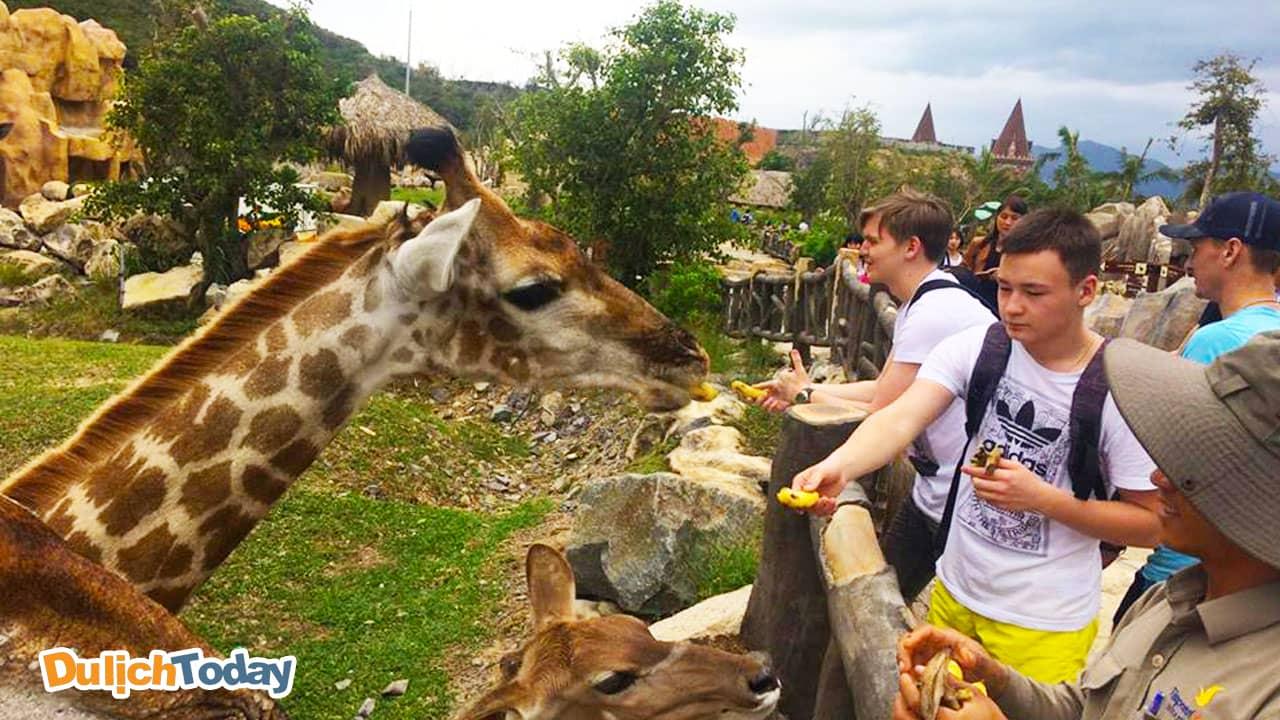 Cho hươu ăn tại vườn Quý Vương tại Vinpearl Land Nha Trang