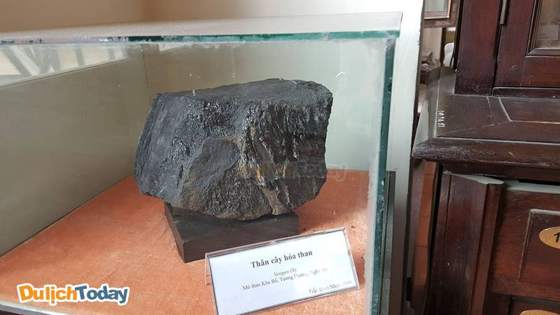 Thân cây hóa than trưng bày tại Bảo tàng địa chất Việt Nam