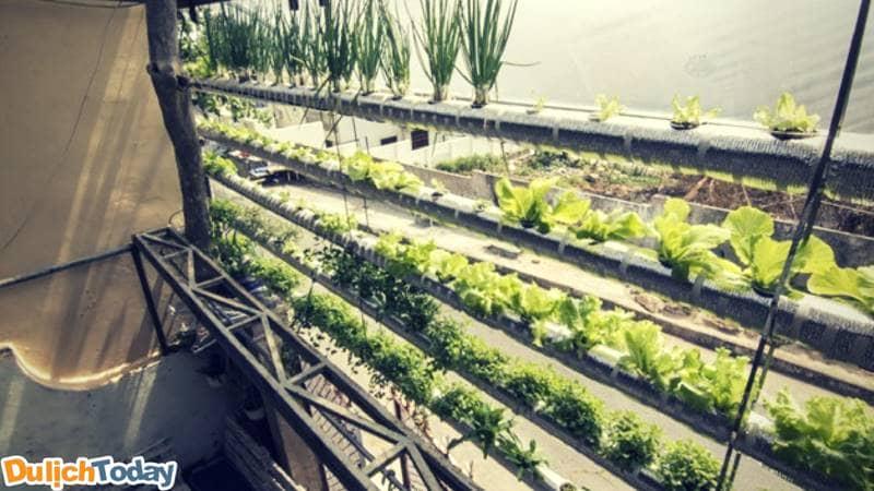 Vườn rau xanh tại Garden city homestay Vũng Tàu khiến khách vừa yêu vừa thích