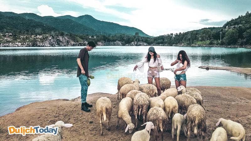 """Những bức hình """" lung linh """" khi chụp ảnh cùng đàn cừu"""