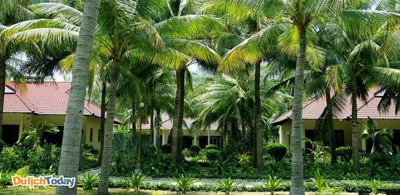 Cây cối tại Diamond Bay Nha Trang rậm rạp nên muỗi nhiều