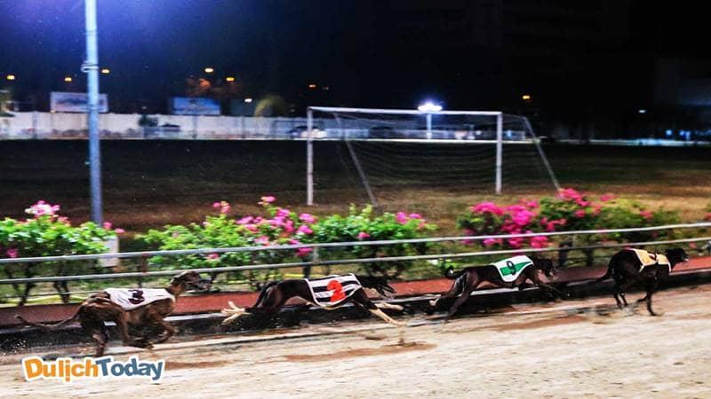 Đường đua chó ở sân vận động Lam Sơn, Vũng Tàu