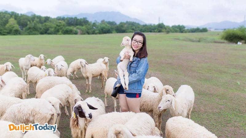 Rất nhiều khách du lịch chụp ảnh cùng đàn cừu