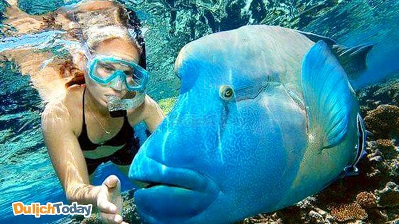 Snorkeling là dịch vụ lặn biển bơi bằng ống thở