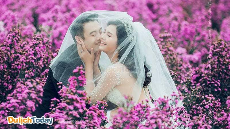 Chụp ảnh giữa ngàn hoa tại Thảo Nguyên hoa Long Biên