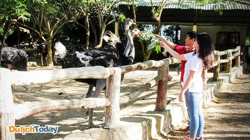 Xem sở thú là một trong những hoạt động được các đôi bạn trẻ yêu thích