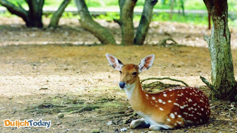 Một trong những điểm thú vị nhất tại VResort có thể kể đến vườn thú mini trong khuôn viên nghỉ.