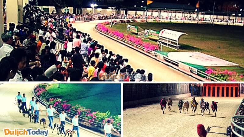 Luôn có rất đông các du khách tới tham gia mỗi trận đua chó tại sân vận động Lam Sơn