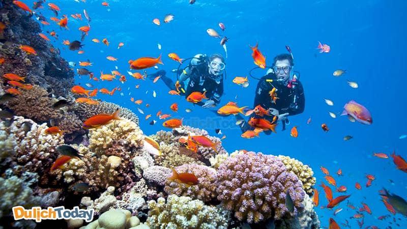 """Hoạt động lặn ngắm san hô rất phát triển, là cơ hội lưu lại những bức ảnh cực """"độc"""""""