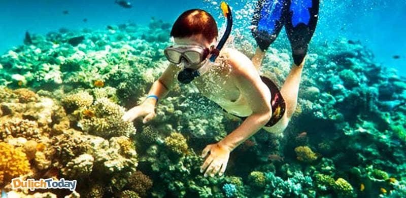 Hoạt động lặn ngắm san hô ở đảo Bình Ba rất đáng trải nghiệm