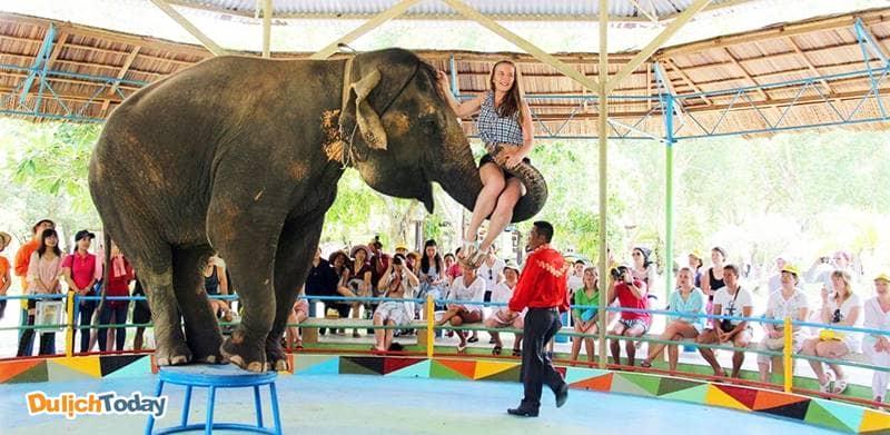 Xiếc thú tại đảo Khỉ là chương trình thú vị phù hợp với đối tượng trẻ nhỏ