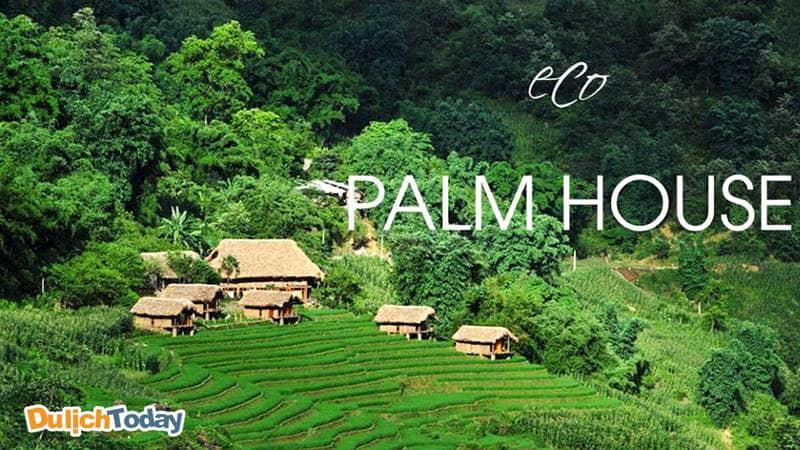 Eco Palm House resort Sapa