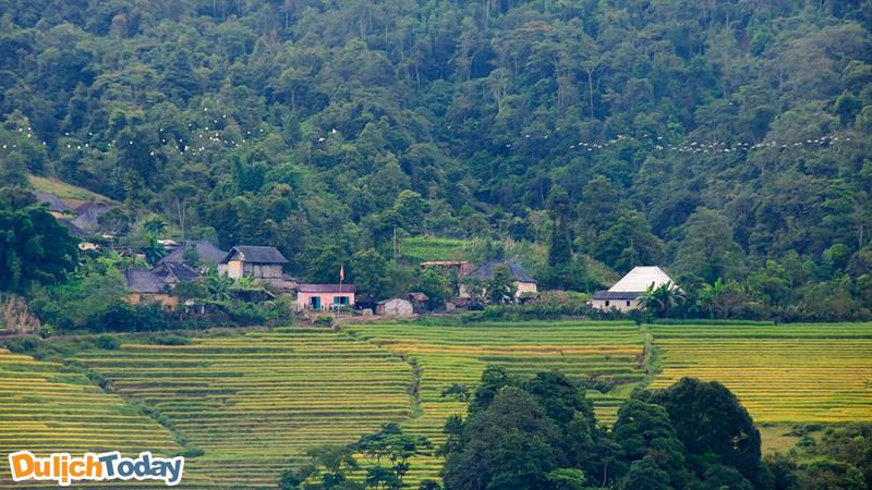 Bản Lao Chải bao quanh bởi ruộng bậc thang vào mùa lúa chín