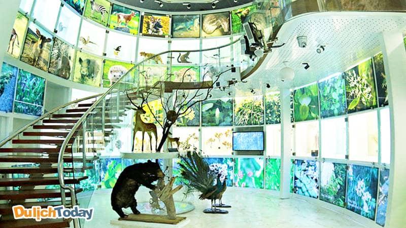 Một góc tại tầng 1 - nơi thể hiện chủ đề hệ sinh thái động vật bên trong bảo tàng