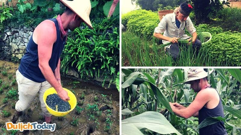 Tham gia các hoạt động thường ngày như bẻ bắp, gieo hạt tại Eco Palm resort