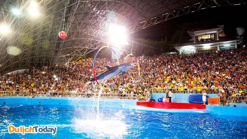 Buổi trình diễn cá heo tại khu vui chơi giải trí Tuần Châu có rất đông khán giả
