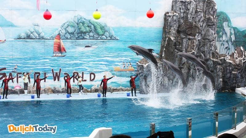 Chương trình biểu diễn cá heo ở Khu du lịch vui chơi giải trí Quốc tế Tuần Châu