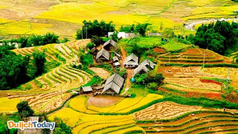 Bản làng ở SaPa lọt thỏm giữa biển lúa chín vàng