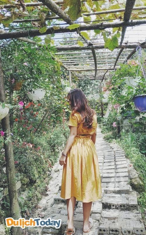 Bạn sẽ có những bức ảnh cực đẹp tại vườn hoa H'Mong