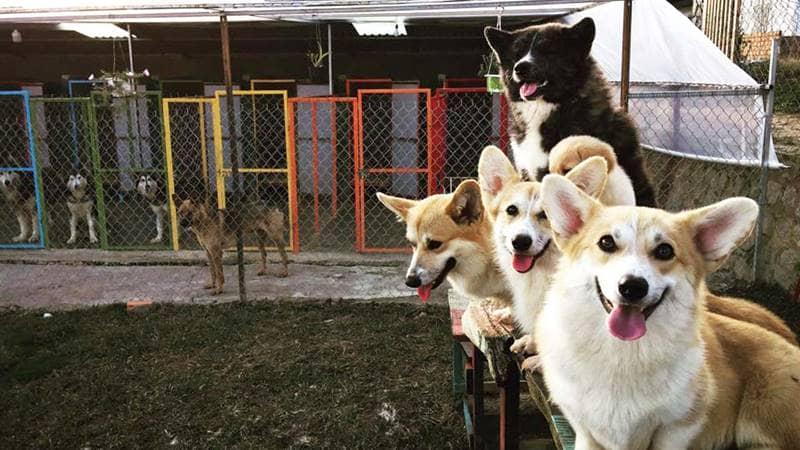Black Rock Garden là địa điểm mới ở Đà Lạt kết hợp giữa loại hình cắm trại và thú cưng. Nguồn: Internet