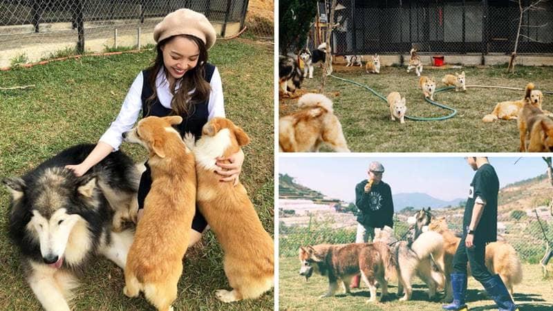 Những chú cún siêu đáng yêu tại nông trại. Nguồn: Internet