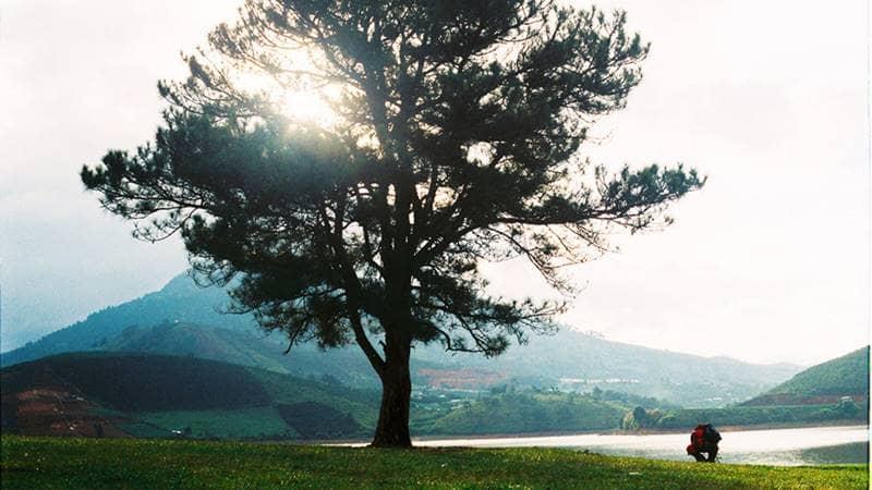 Cây thông cô đơn ở hồ suối Vàng