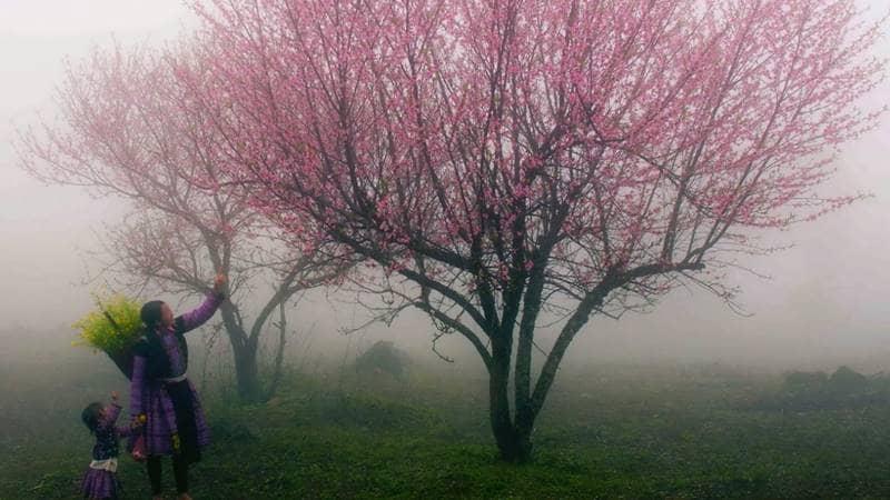 Ngắm cảnh đẹp Sapa mùa xuân - hoa đào nở ©internet