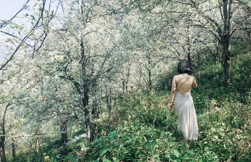 Lạc vào rừng hoa mận ở Sapa © internet