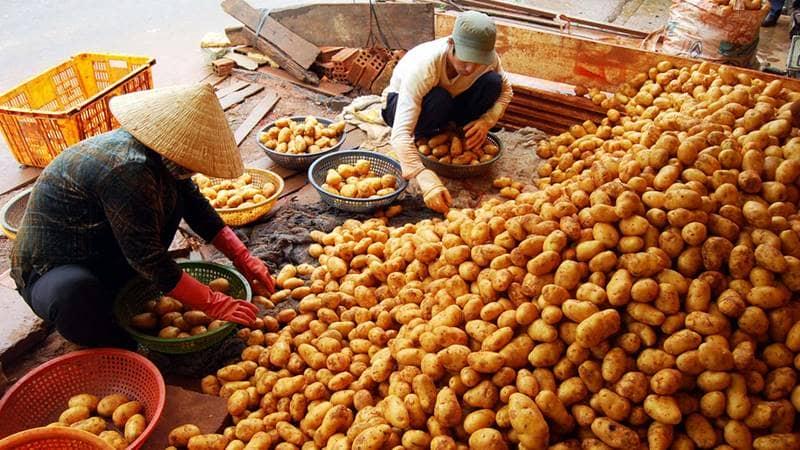 Khoai tây là mặt hàng được bán nhiều nhất ở chợ. Nguồn: Internet