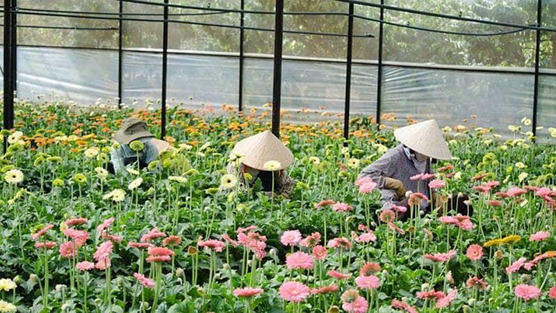 Vạn thành là làng hoa lâu đời nhất ở Đà Lạt