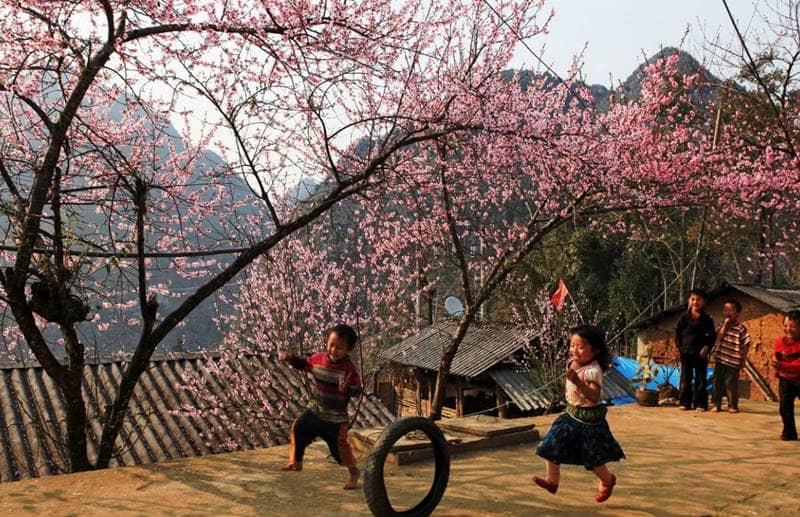 Vui chơi dưới tán hoa đào rực rỡ