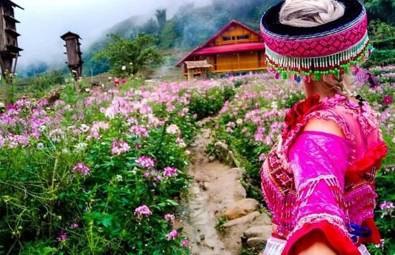 Sapa mùa xuân là mùa của hoa © instagram