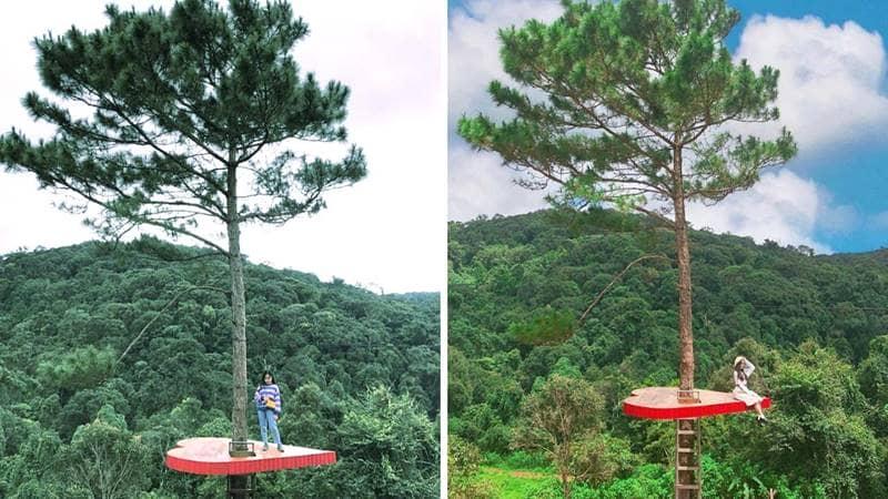 Địa điểm mới ở Đà Lạt cho giới trẻ tha hồ chụp hình check-in. Nguồn: Internet