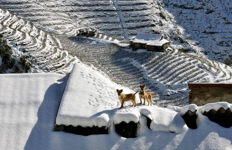 Ruộng đồng, nhà cửa chìm trong tuyết trắng